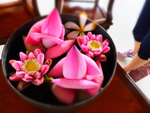 カンボジア蓮の花